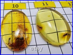 Natural Baltic Amber Free Shape Fossil Color Cabochon With Insects, Various size, Genuine Baltic Amber Cabochon